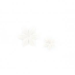Fleurs Edelweiss